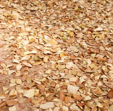 leaves Royaltyfria Foton