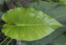 Leaves01 fotografie stock libere da diritti
