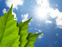 Leaves. A leaf bathes in sunlight. In the background blue sky, and sun stock image