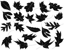 Leaves. Twenty Black and White Leaves Royalty Free Stock Photos