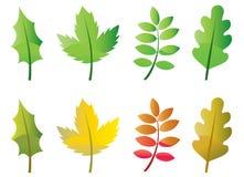 Leaves royalty free illustration