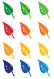 Leaves. Different colored seasonable leaves under rain Royalty Free Stock Photography