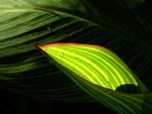 Leaves Stock Photography