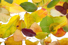 Leaves. Background of arranged in a chaotic manner leaves, yellow, red and with a predominance of green Stock Photography