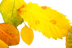 Leaves. On each other, yellow, background stock photos
