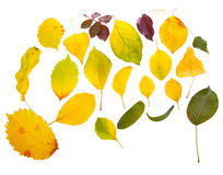 Leaves. Of different types in the chaos of yellow insulated Royalty Free Stock Image