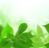 Leaves. Beautiful Fresh Green Leaves Border on a Blurred Background stock images