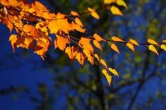 leaves Royaltyfria Foton