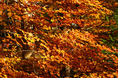 Leaves. Colour leaves in autumn forest Stock Photo