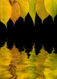 Leaves. Multicolored autumn leaves on a black in water Royalty Free Stock Images