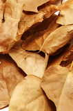 leaves Arkivfoton