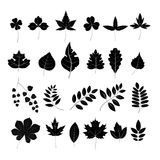 Leaves. Set of leaves. Black and white graphics. Vector Royalty Free Stock Photography