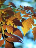Leaves. Brown and red leaves in spring stock images