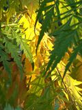 Leaves. Yellow and green leaves on a tree Stock Photo