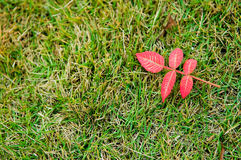 Leaves. Red leaves are a symbol of the arrival of autumn Royalty Free Stock Image