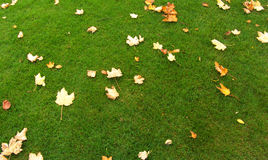 Leaves. On Green Grass stock images