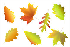 Leaves. An illustration of computer generated autumn leaves Stock Photography