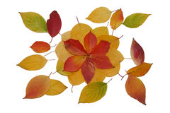 Leaves. Red, yellow and green leaves on the white background Stock Image