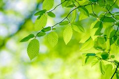 Leaves Stock Images