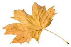 leaves royaltyfri fotografi