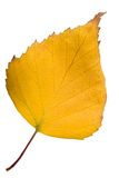 Leaves. Autumnal leaves on white background. Macro closeup Stock Photo