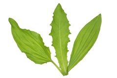 Leaves. Green leaves of plants on a white background Royalty Free Stock Photos