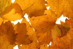 leaves Arkivbilder