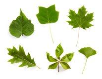leaves Royaltyfri Bild