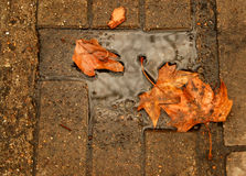 Leaves. On the sidewalk at autumn Royalty Free Stock Images