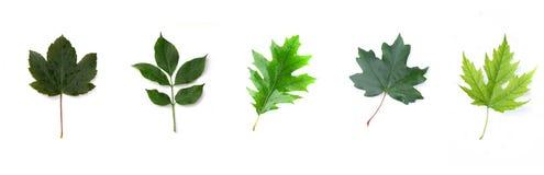 Leaves Royaltyfri Foto