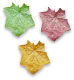 Leaves. Three isolated leaves in red, green, yellow colors Stock Images