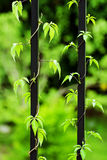 Leaves. The green leaves on the baluster stock photography