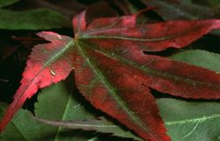 Leaves. Fallen leaves in a pile royalty free stock photo