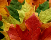Free Leaves Royalty Free Stock Photo - 200325
