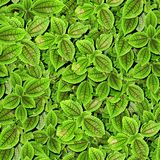 Leaves. Seamless Texture Tile from Photographic Original stock images