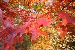 leaves στοκ εικόνα