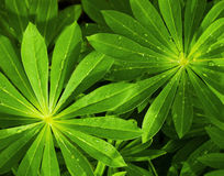 Leaves. Close up of leaves in sunlight Royalty Free Stock Image
