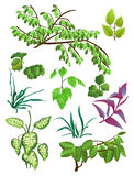 Leaves. The set of leaves, tree limbs and pot plants. Vector illustration stock illustration