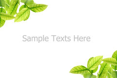 Leaves. Pattern of  leaves on white background Royalty Free Stock Images