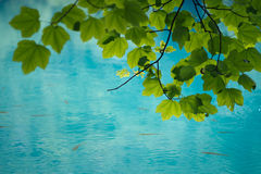 Leaves. In Plitvice Lakes National Park stock image
