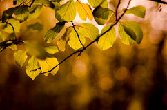 Leaves. Autumn leaves in a park Royalty Free Stock Photography