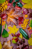 Leaves. Collection of beautiful colorful autumn leaves over wooden background royalty free stock photos