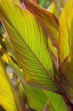 Leaves. The foliage shined by the sun. Nature background Royalty Free Stock Images