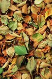 Leaves. Autumnal colour leaves on the ground Royalty Free Stock Images