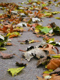 Leaves. Fallen leaves Stock Photos