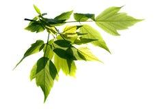 leaves Arkivfoto