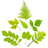 Leaves. Set of leaves  isolated on white background Stock Images