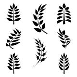 Leaves. Black icons and graphics of the leaves Royalty Free Stock Photography