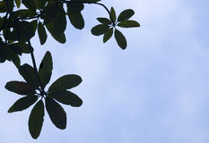 Leaves. In silhouette against the bright sky Royalty Free Stock Image