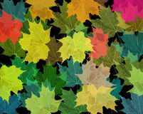 Leaves. Background of colored Leaves Stock Photography